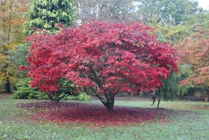 Autumn colours in Emo Court Gardens